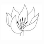 Ver Botanisch Kunstenaars