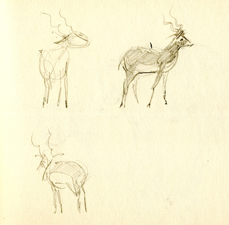 Antilope, potlood, Blijdorp