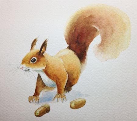 Eekhoorn, aquarel
