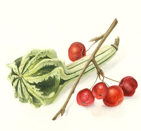 Kalebas en malus red sentinel, aquarel