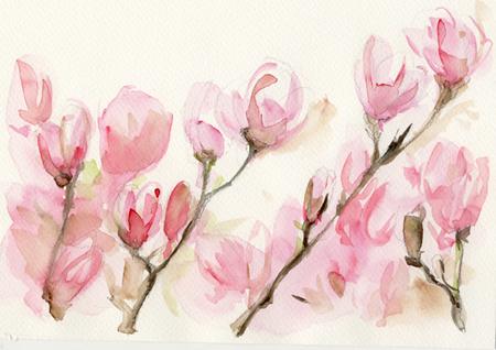 magnolia 00
