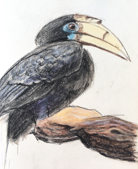 Papoea Jaarvogel, Blijdorp Zoo