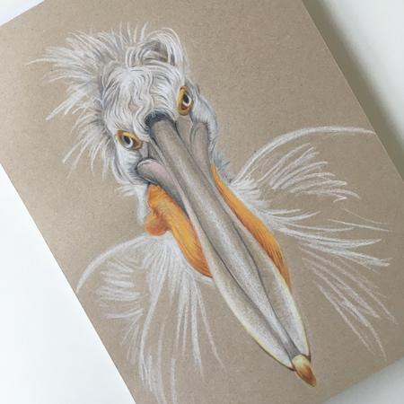kroeskop-pelikaan-1