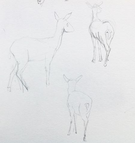 schetsboek-antilope-pix-450