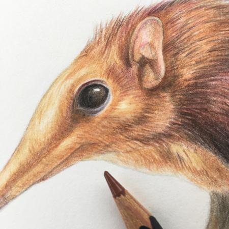Steppeslurfhondje detail, kleurpotloden