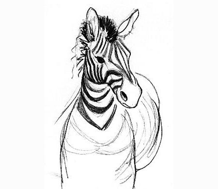 Zebra Blijdorp Zoo