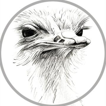 struisvogel-thumpnail